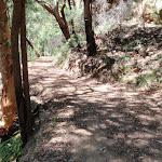 Winding along the Pearl Beach / Patonga fire trail (219500)