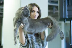 Фотографии с международной выставка кошек FiFe 8-9 сентября 2012г. Санкт-Петербург
