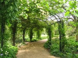 green vines path, μονοπάτι με αμπέλια.