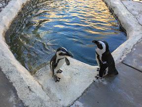 penguins_2_1