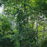 Au Sud de Selva Alegre (San Lorenzo, Esmeraldas), 28 novembre 2013. Photo : J.-M. Gayman