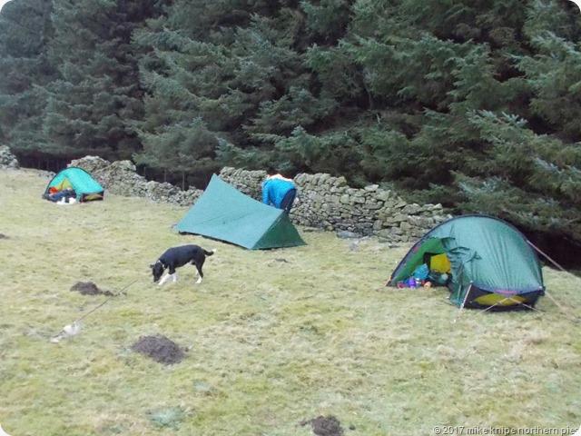hollins cross camp