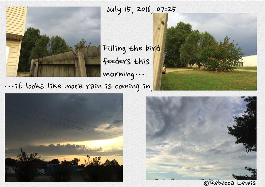 Filling Bird Feeders 2016 Jul 15 0725
