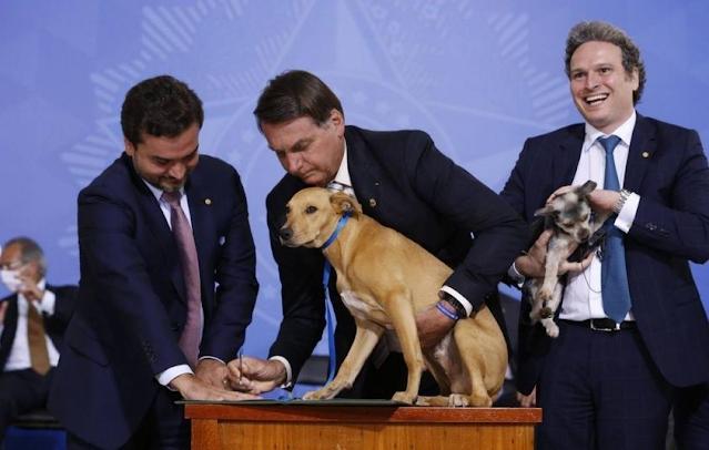 O presidente Jair Bolsonaro sancionou a lei que aumenta a punição para os crimes de maus-tratos contra cães e gatos.