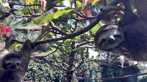 Sloth Salvation thumbnail