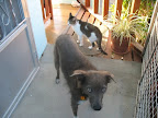 Luvy, my lovable dog and Dolly, my spoiled cat, - dedicated members of my welcome team.