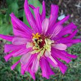 Gardening 2012 - 115_2045.JPG