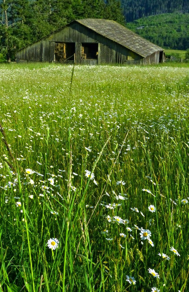 """""""Daisy Barn"""" By Robin Prentice -- 3d place B General"""