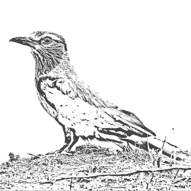 Bird poem, Bird Image, Nature Sketches, Wildlife Photography, poetry, Prison Poem, Beautiful Bird,