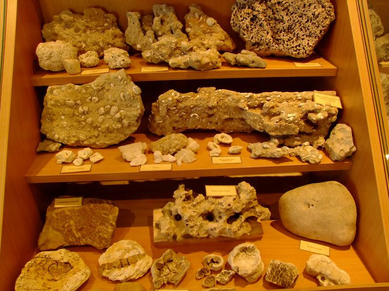 Tengeri maradvány leletek Vanyarcon