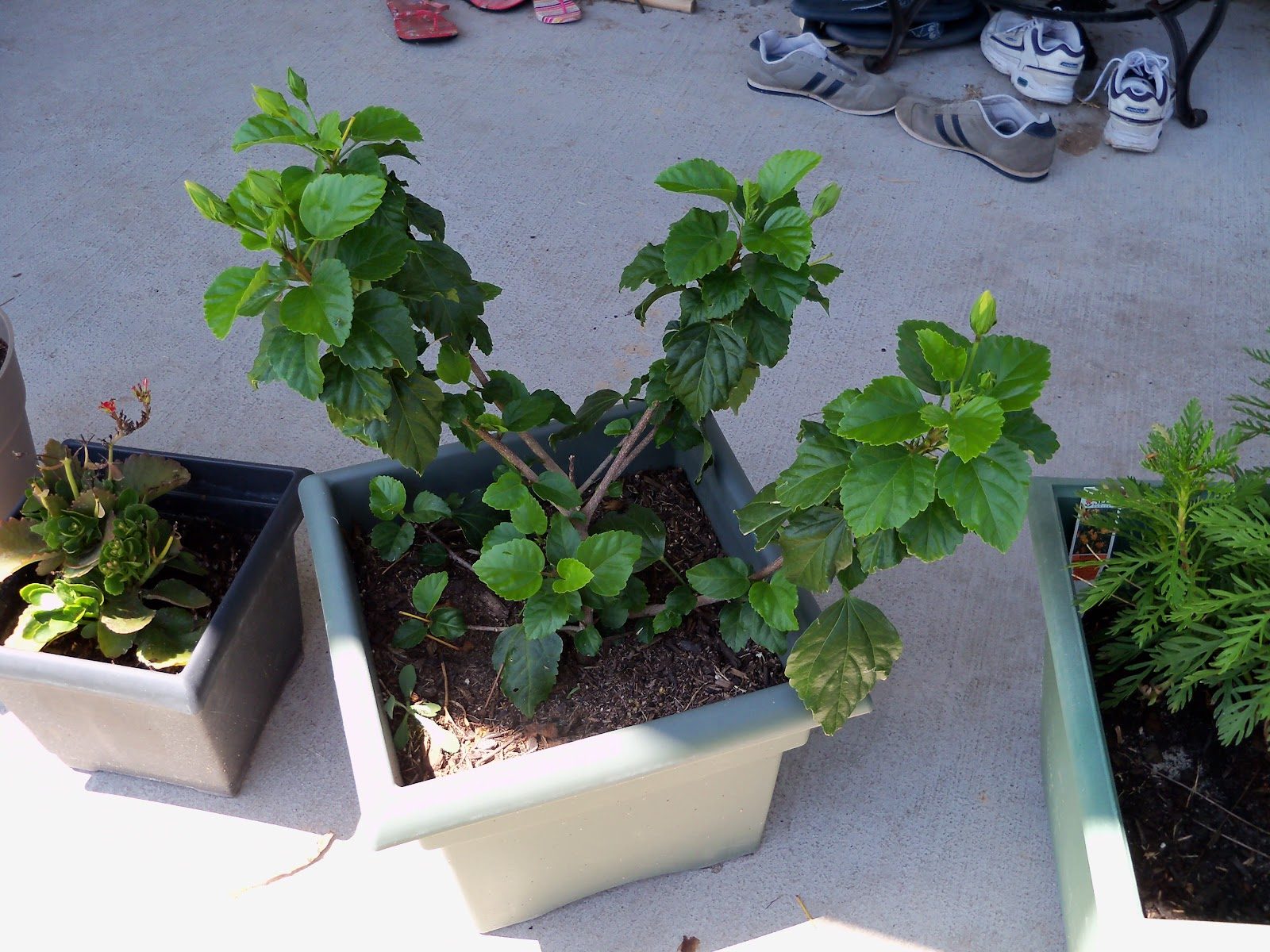Gardening 2010, Part Three - 101_4494.JPG