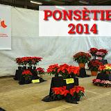 ExposicioPonseties2014