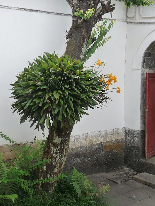 Chine .Yunnan,Menglian ,Tenchong, He shun, Chongning B - Picture%2B762.jpg