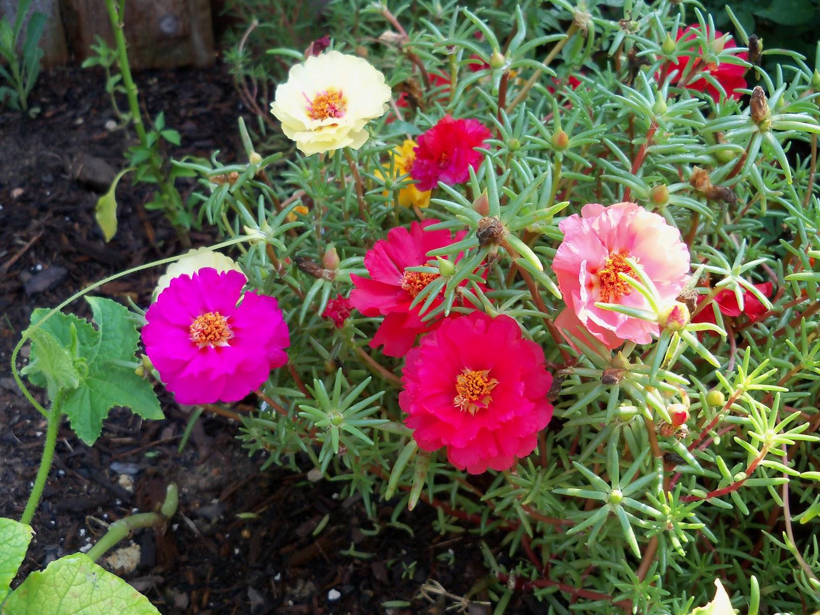 Gardening 2010, Part Two - 101_3297.JPG
