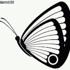 Photo - Butterflies Designs