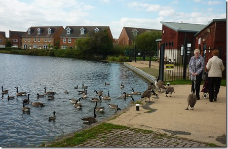 8 the geese knew these ladies at brownhills