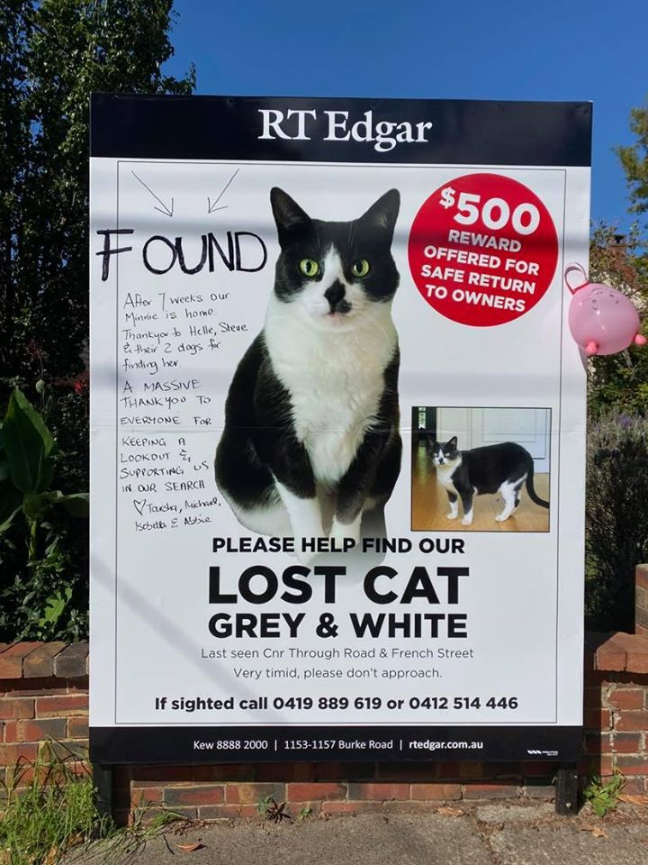giant street billboard with missing cat's image