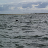 Kano Rijnland 2012 Zeekajakken Zeeland - 20121006%2BZeekajakken%2B%252819%2529.JPG