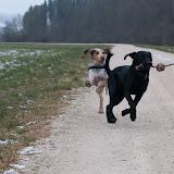 Spaziergang Barack und Beau_13.01.2013_Fotos by Gunda Leiss