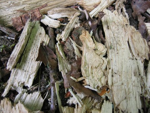 23 bark