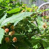 Gardening 2013 - 115_6282.JPG