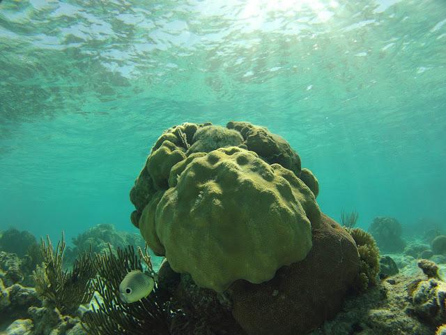 https://lh3.googleusercontent.com/-x_BAhvQUwUg/ULVdVFldSdI/AAAAAAAADIw/lYCTIFtWGVA/s640/20121119_CuevaDeLosPeces_Snorkeling_0326.jpg