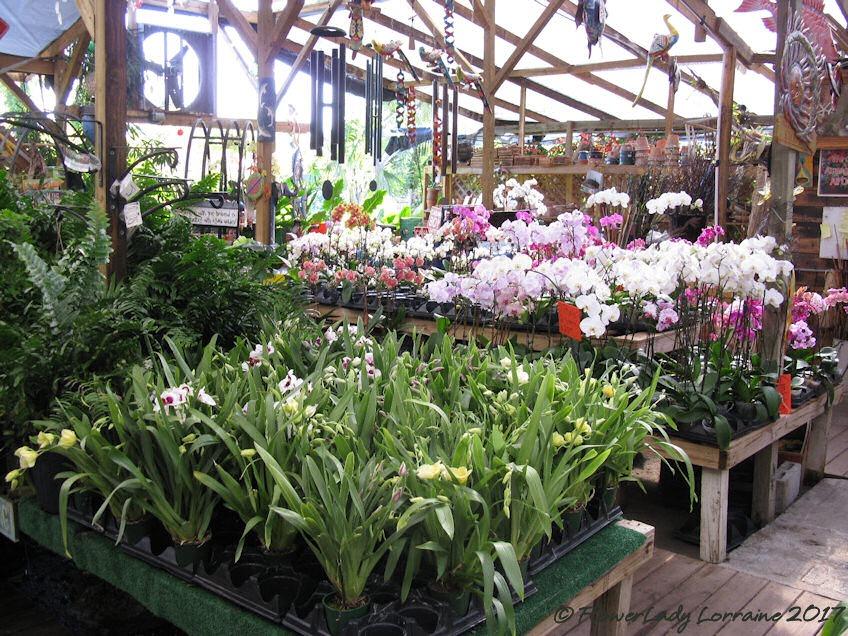 [05-08-orchids%5B4%5D]