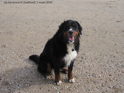 Zandvoort strand 3mrt2010.JPG