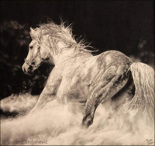 Running arabian horse drawing - photo#16