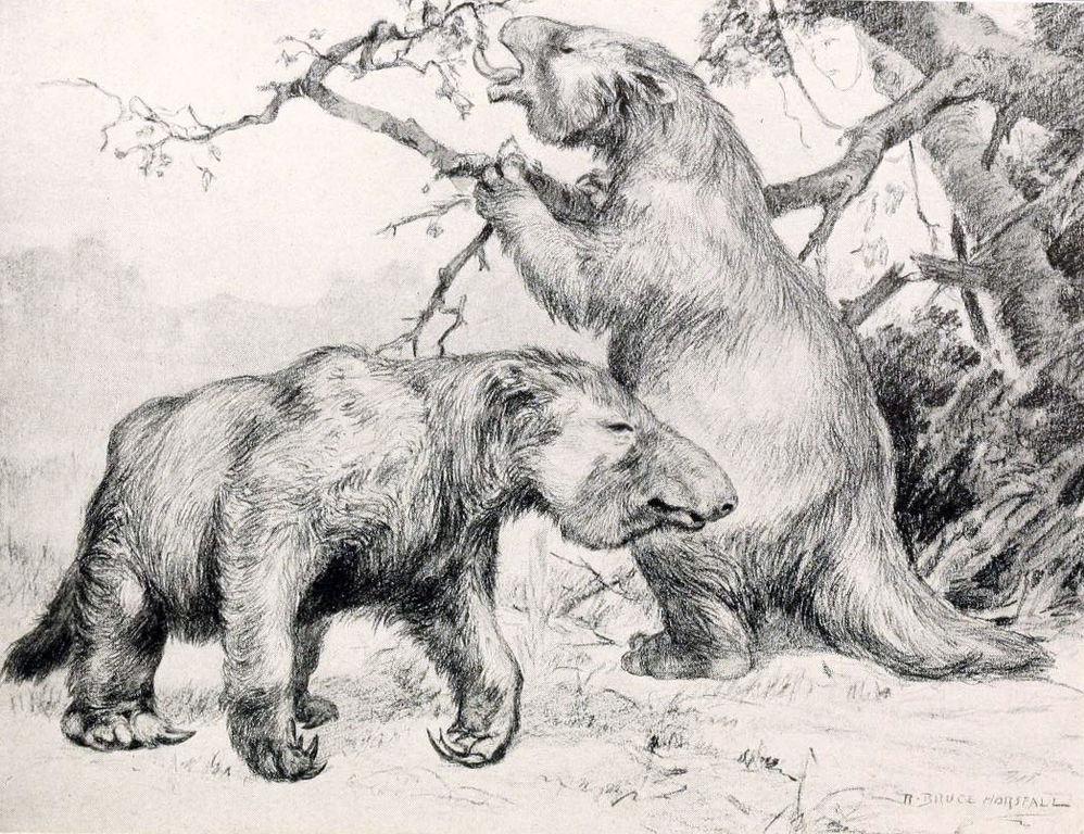 Megatherium_americanum2