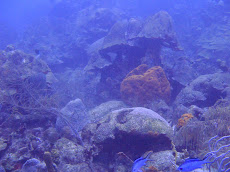 Giant underwater mushrooms :)