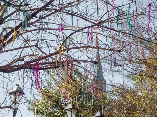 Beads in tree New Orleans Mardi Gras