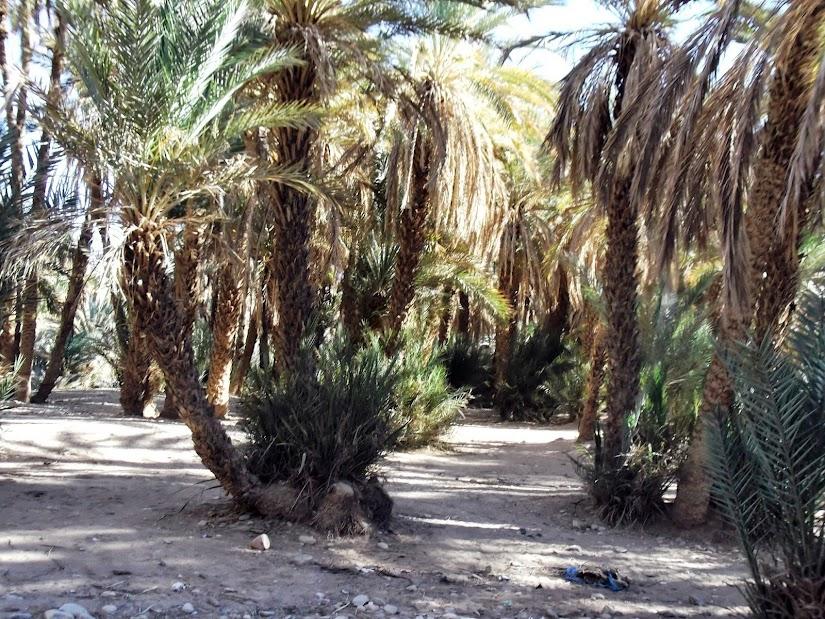 marrocos - Marrocos e Mauritãnia a Queimar Pneu e Gasolina - Página 11 DSCF1277