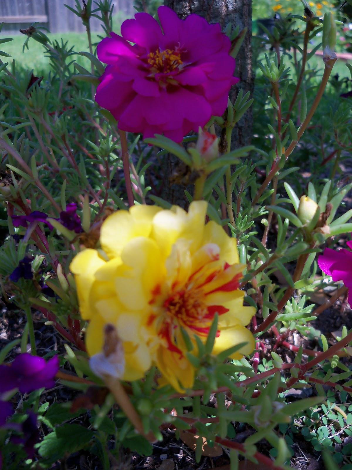 Gardening 2010, Part Three - 101_4463.JPG