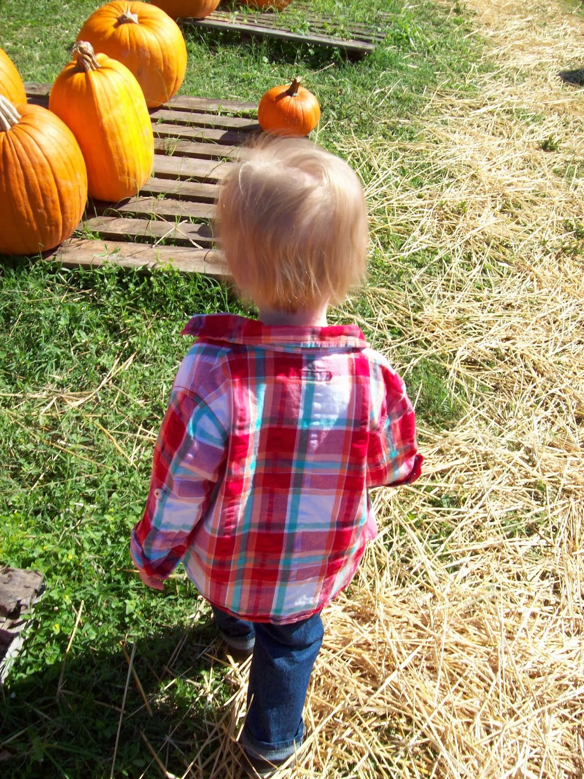 Pumpkin Patch - 114_6549.JPG