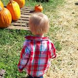 Pumpkin Patch - 114_6549.JPG