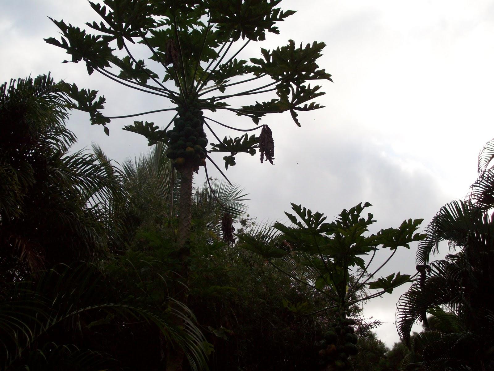 Hawaii Day 5 - 114_1375.JPG