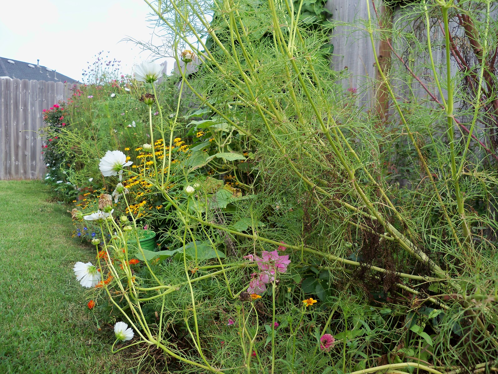 Gardening 2010, Part Three - 101_5172.JPG