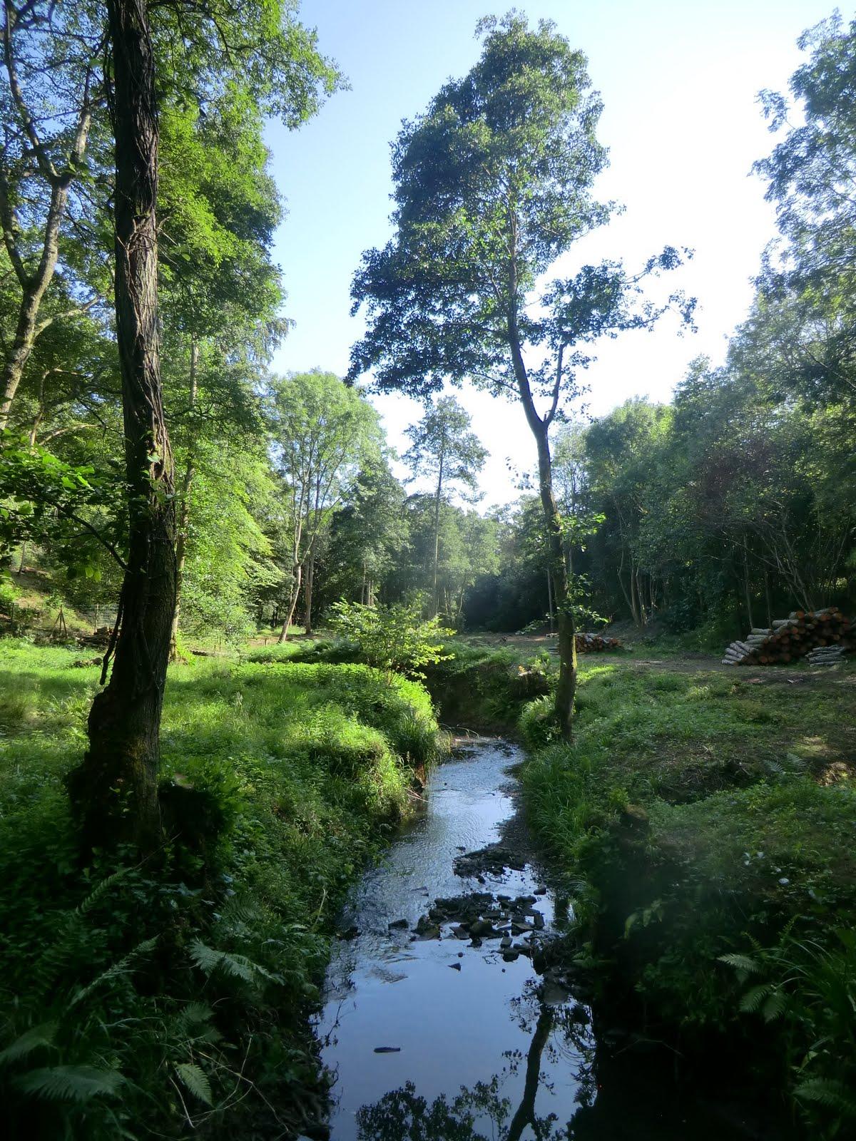 CIMG4127 Across a stream