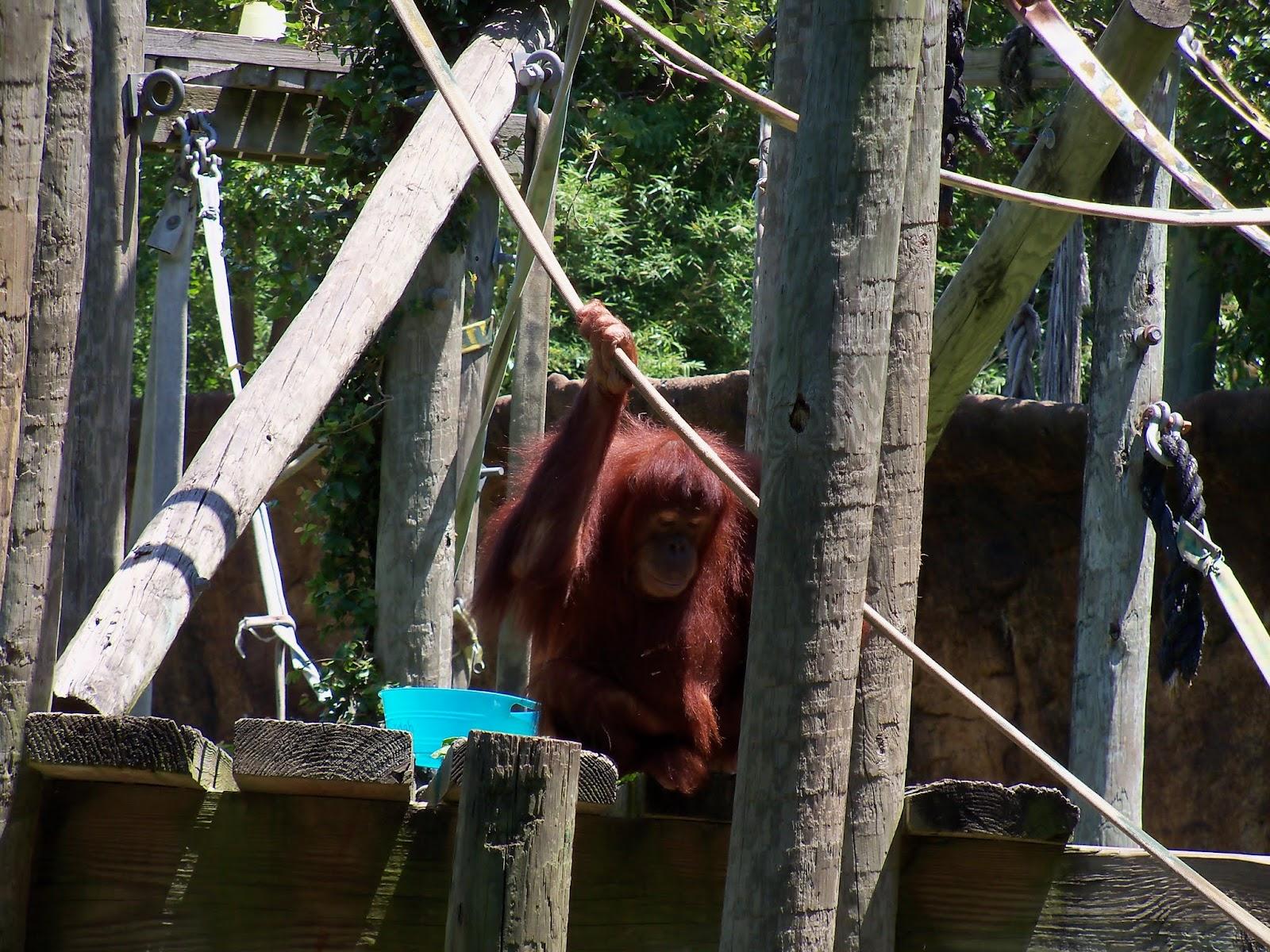 Houston Zoo - 116_8488.JPG