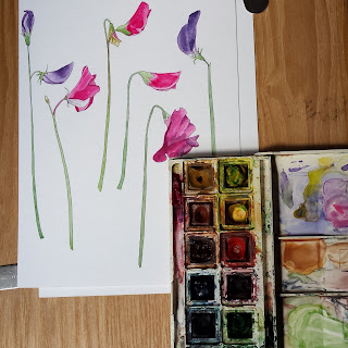 Sweet Peas modern botanical illustration original by Alice Draws The Line