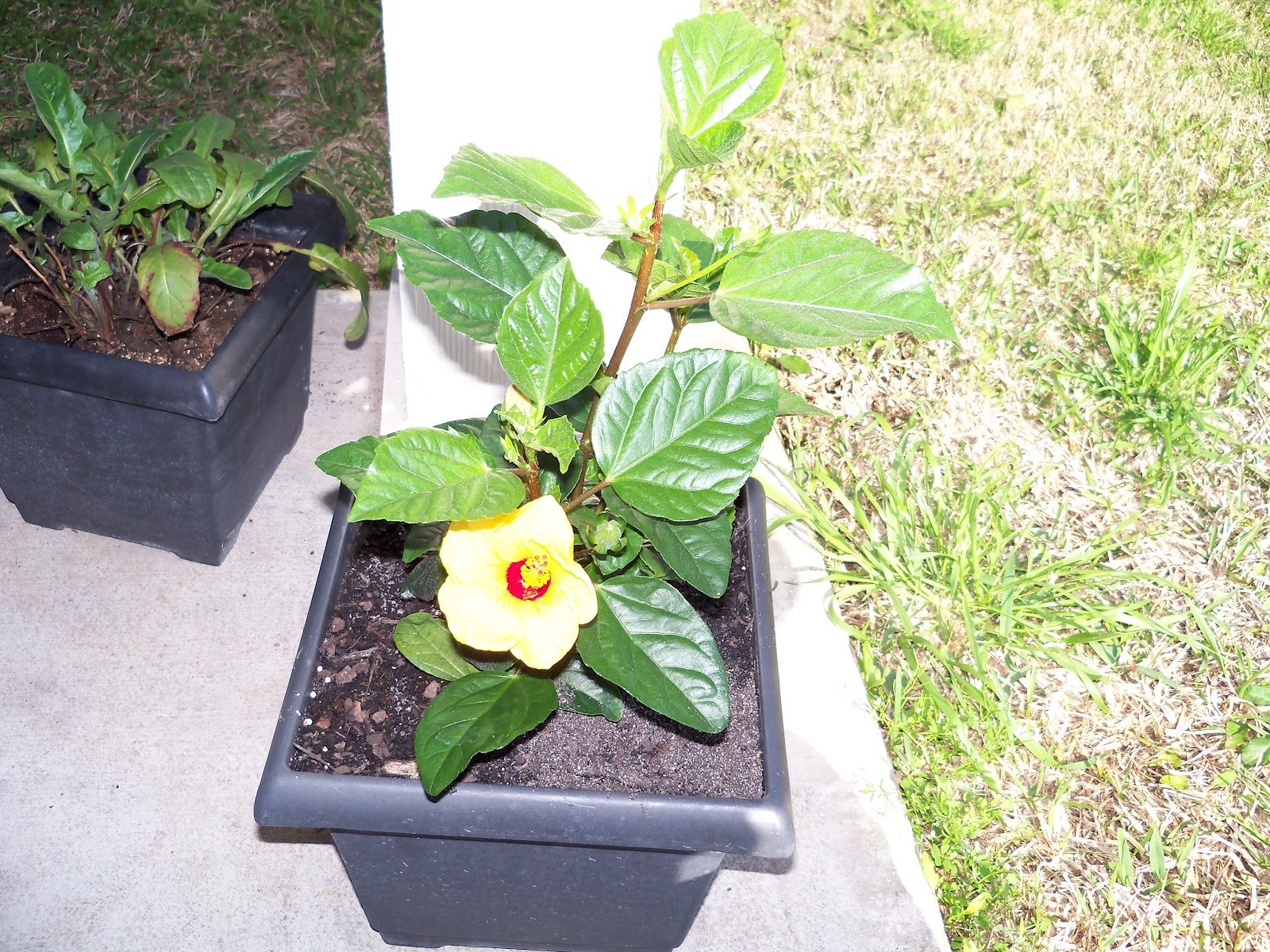 Gardening 2010 - 101_0249.JPG