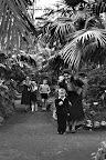 Látogatók a Pálmaházban, a budapesti állatkertben, 1957 (Fotó: Fortepan)