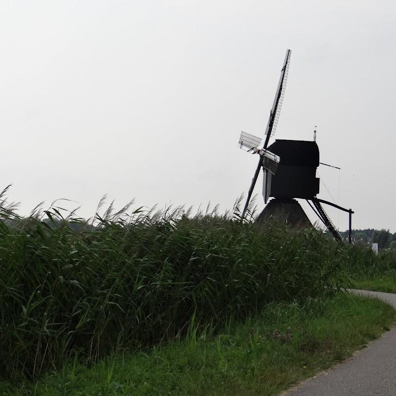 Day_6_Kinderdijk_25.JPG