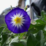 Gardening 2012 - 115_1601.JPG