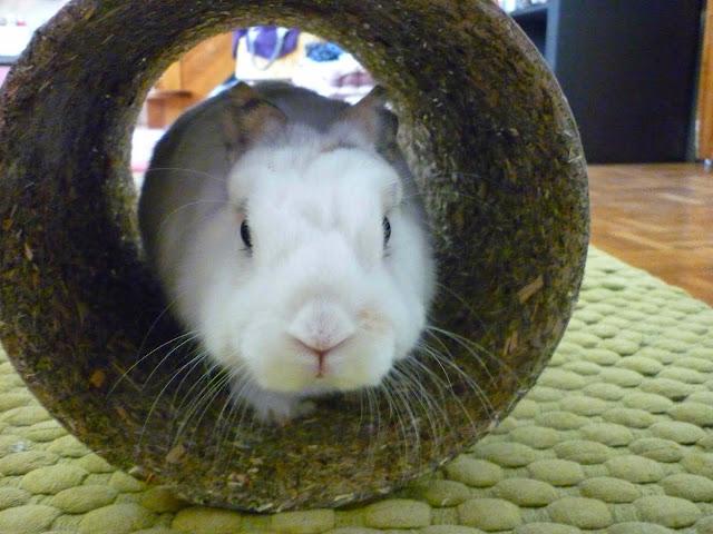 Mirana, lapine blanche-[adoptée] Mirana19