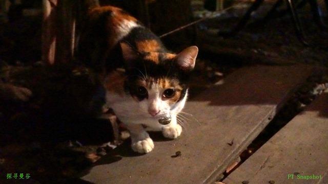 大城的夜猫子