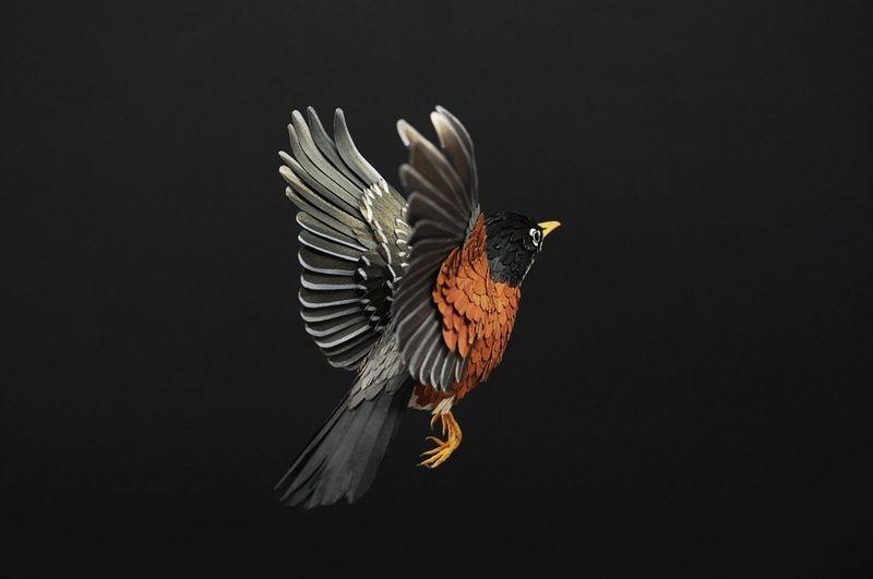 diana-beltran-herrera-birds-1