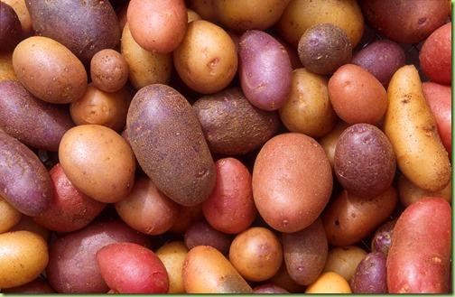 potato diversity