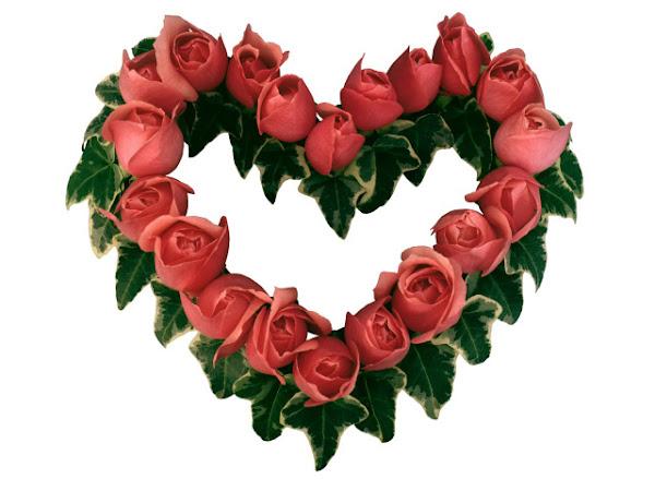 Valentinovo besplatne ljubavne slike za mobitele 640x480 čestitke free download Valentines day 14 veljača biljke cvijeće ruže